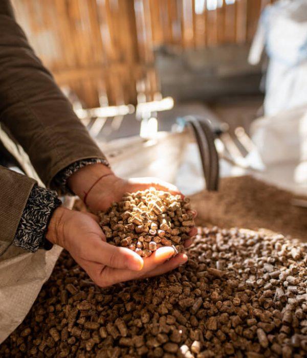 wood-pellets-biofuels-cat-litter-man-s-hands (1) (1)